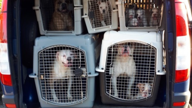 verwaarloosde honden